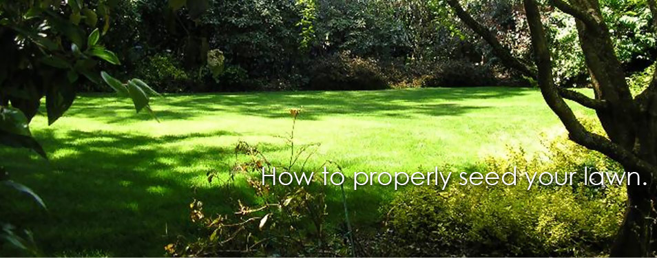 How To Plant Your Lawn Properly